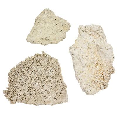 Piatra Plata de Recif -Reef Plates