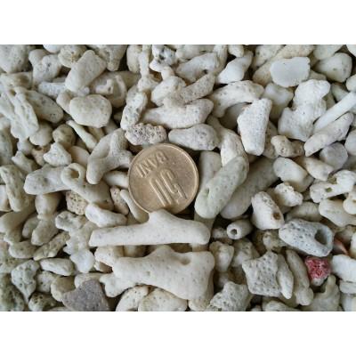 Substrat Spartura De Corali 30mm (vrac)